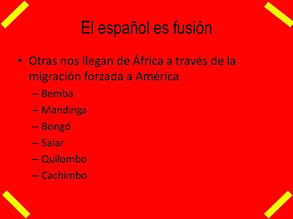 El español es fusión Otras nos llegan de África a través de la migración forzada a América – Bemba – Mandinga – Bongó – Salar – Quilombo – Cachimbo