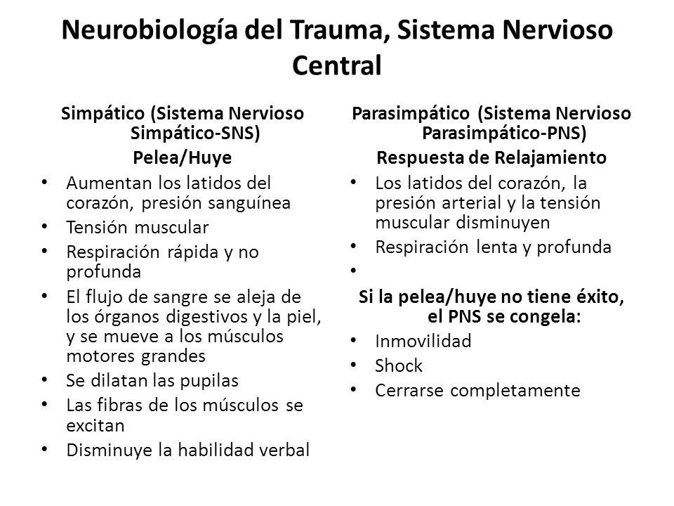 Neurobiología del Trauma, Sistema Nervioso Central Simpático (Sistema Nervioso Simpático-SNS) Pelea/Huye Aumentan los latidos del corazón, presión san