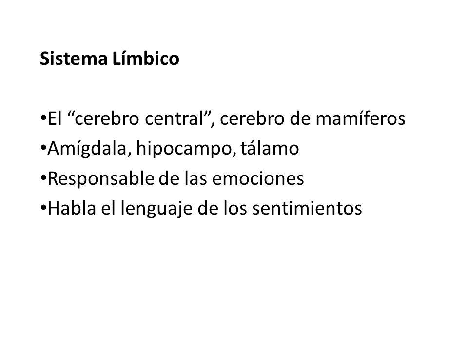 Sistema Límbico El cerebro central, cerebro de mamíferos Amígdala, hipocampo, tálamo Responsable de las emociones Habla el lenguaje de los sentimiento