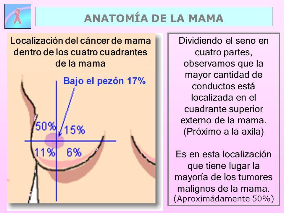 Dividiendo el seno en cuatro partes, observamos que la mayor cantidad de conductos está localizada en el cuadrante superior externo de la mama. (Próxi