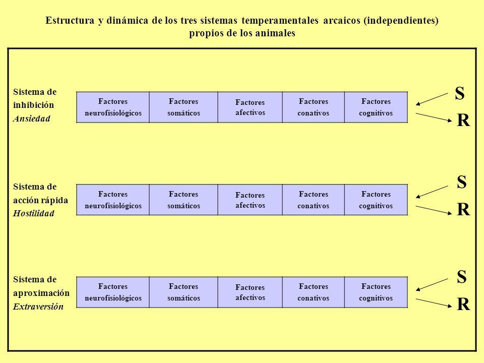 Estructura y dinámica de los tres sistemas temperamentales arcaicos (independientes) propios de los animales Sistema de inhibición Ansiedad Sistema de acción rápida Hostilidad Sistema de aproximación Extraversión S R S R S R Factores neurofisiológicos Factores somáticos Factores afectivos Factores conativos Factores cognitivos Factores neurofisiológicos Factores somáticos Factores afectivos Factores conativos Factores cognitivos Factores neurofisiológicos Factores somáticos Factores afectivos Factores conativos Factores cognitivos