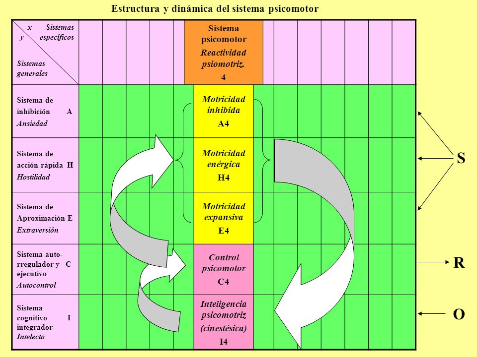 Estructura y dinámica del sistema psicomotor x Sistemas y específicos Sistemas generales Sistema psicomotor Reactividad psiomotriz. 4 S R O Sistema de