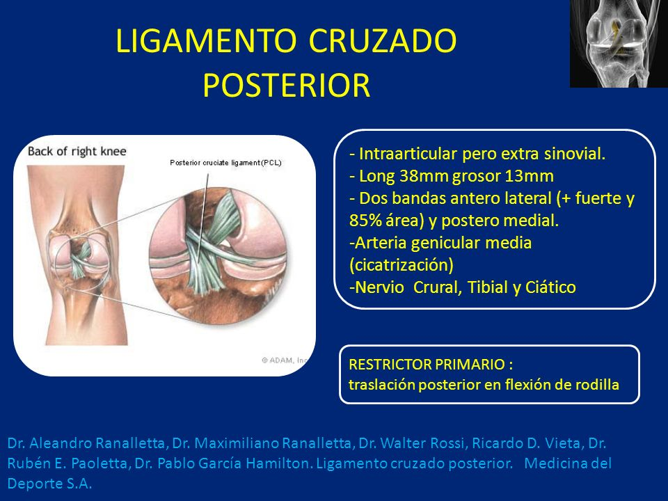 LIGAMENTO CRUZADO POSTERIOR - Intraarticular pero extra sinovial.