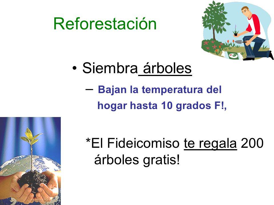 Reforestación Siembra árboles – Bajan la temperatura del hogar hasta 10 grados F!, *El Fideicomiso te regala 200 árboles gratis!