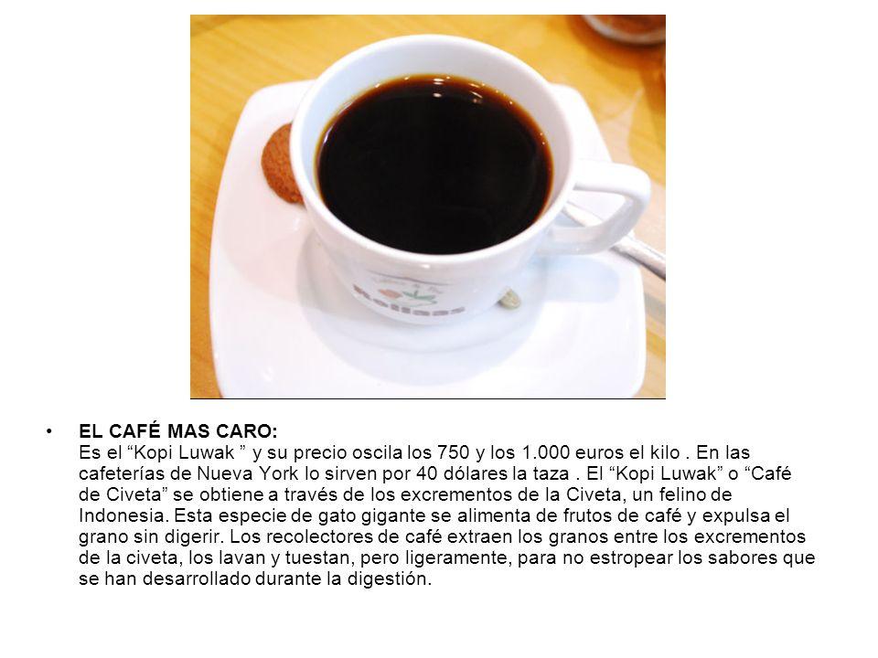 EL CAFÉ MAS CARO: Es el Kopi Luwak y su precio oscila los 750 y los 1.000 euros el kilo. En las cafeterías de Nueva York lo sirven por 40 dólares la t