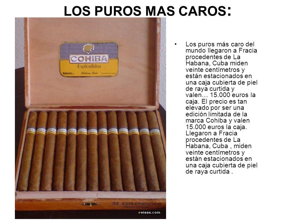 LOS PUROS MAS CAROS : Los puros más caro del mundo llegaron a Fracia procedentes de La Habana, Cuba miden veinte centímetros y están estacionados en u