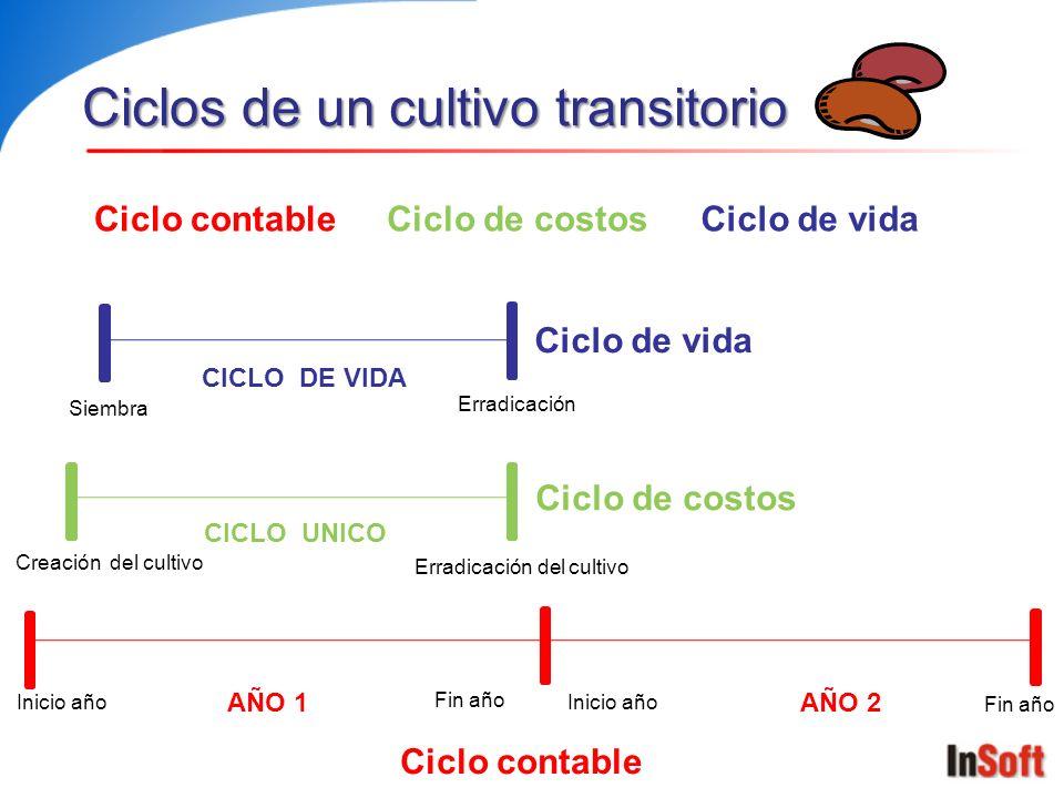 Ciclos de un cultivo transitorio Ciclo contableCiclo de vidaCiclo de costos AÑO 1AÑO 2 Inicio año Fin año Inicio año Fin año CICLO UNICO Creación del