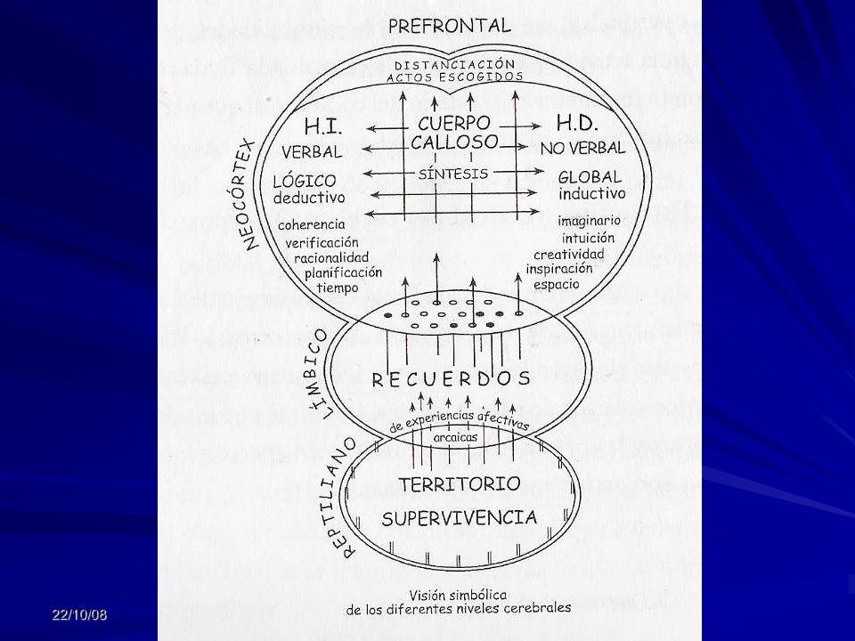 4to cerebro Prepara una accion futura, planificación, reflexión Puede trascender lo emocional y lo racional ¨lineal¨ (racional circular u holística) S
