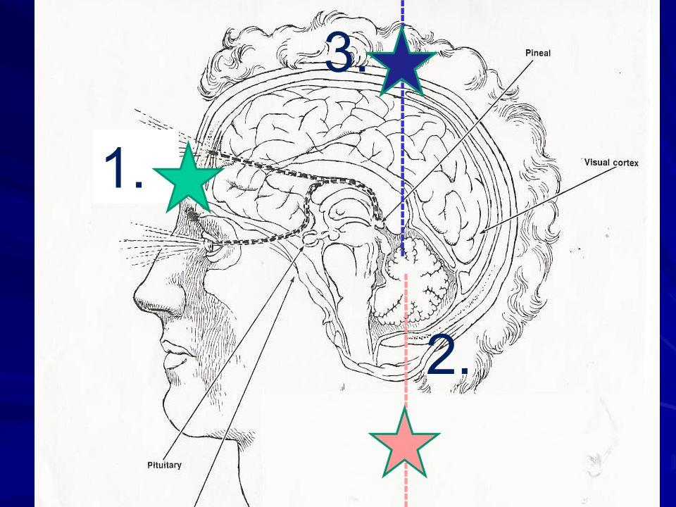 2 conceptos claves La información que proviene del exterior se propaga verticalmente al cerebro (de reptil a emocional y de emocional a corteza) y deb
