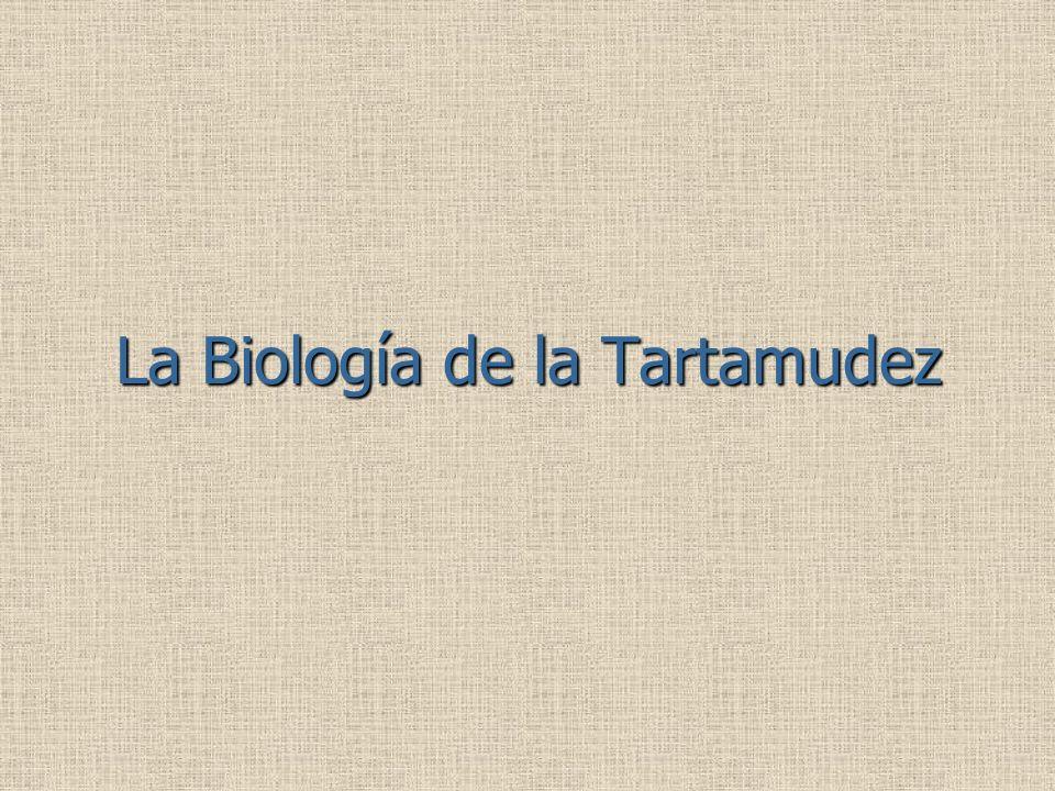 La Biología de la Tartamudez