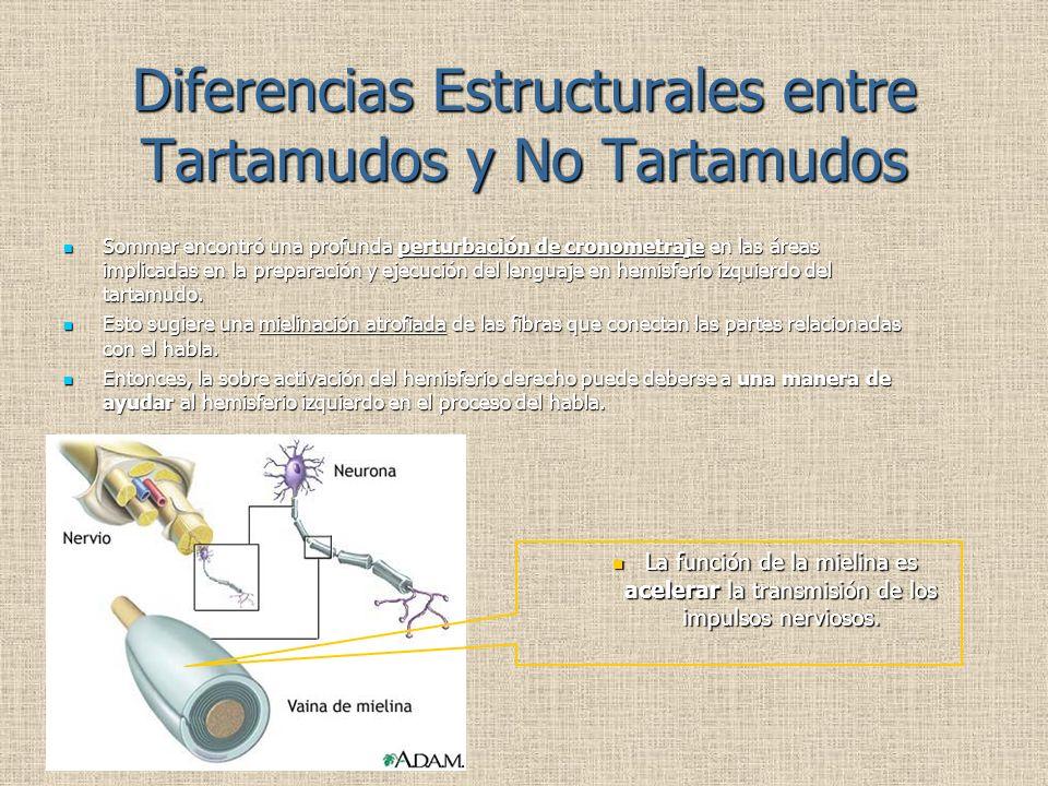 Diferencias Estructurales entre Tartamudos y No Tartamudos Sommer encontró una profunda perturbación de cronometraje en las áreas implicadas en la preparación y ejecución del lenguaje en hemisferio izquierdo del tartamudo.