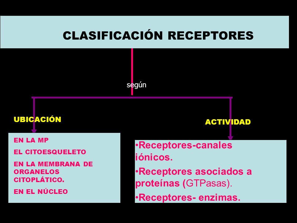 CARACTERÍSTICAS DE LOS RECEPTORES 1.Son proteínas o glicoproteínas. 2.Tienen diversas ubicaciones: membrana celular, membrana de los organelos, citoso