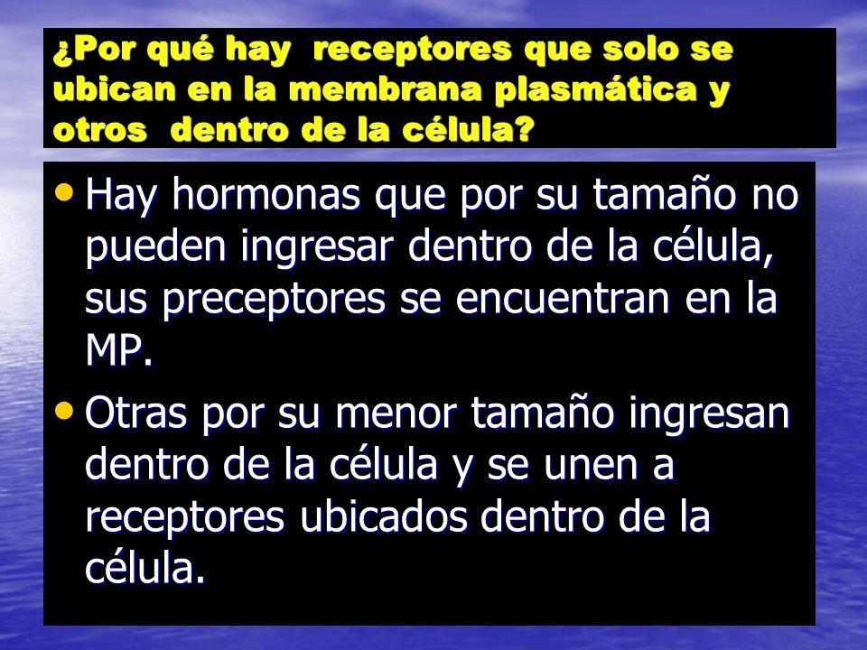 CLASIFICACIÓN RECEPTORES UBICACIÓN ACTIVIDAD EN LA MP EL CITOESQUELETO EN LA MEMBRANA DE ORGANELOS CITOPLÁTICO. EN EL NÚCLEO Receptores-canales iónico