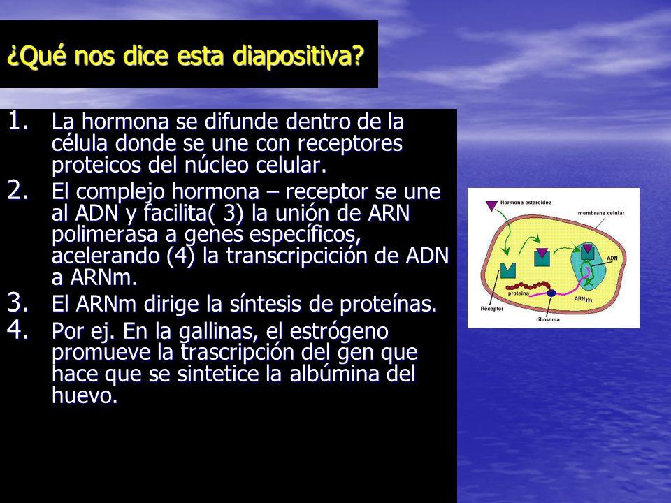 RECEPTORES HORMANALES CITOPLASMA