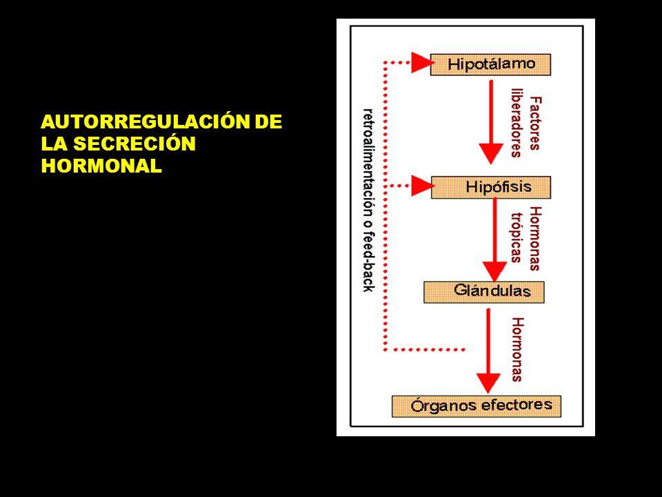 ¿Qué nos dice esta diapositiva? 1. La hormona se difunde dentro de la célula donde se une con receptores proteicos del núcleo celular. 2. El complejo