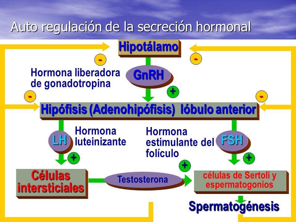 CONTRACCIÓN DEL UTERO SECRECIÓN OXITOCINA EN LA NEUROHIPÓFISIS (+) AUMENTA CONTRACCIÓN ÚTERO (+) AUMENTA SECRECIÓN PROSTAGLANDINAS (+) SE POTENCIA CON