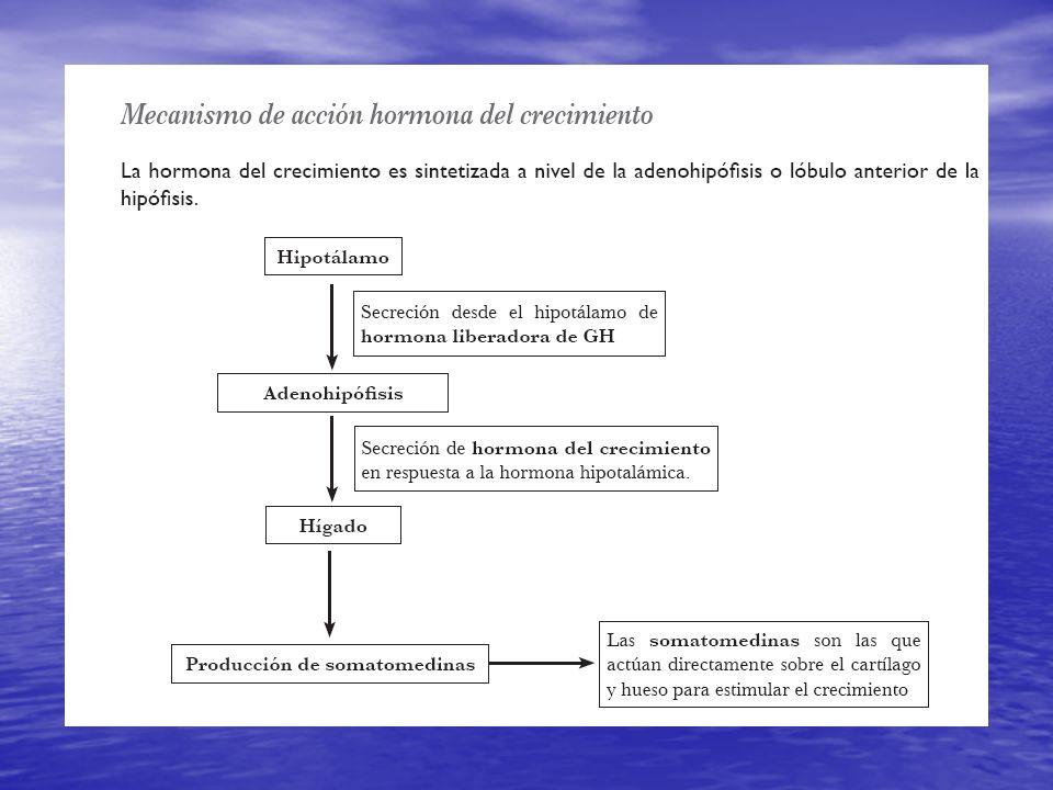 Hormonas NO trópicas de la Adenohipófisis. Actúan directamente sobre sus células blanco (no hay una glándula intermediaria): Actúan directamente sobre