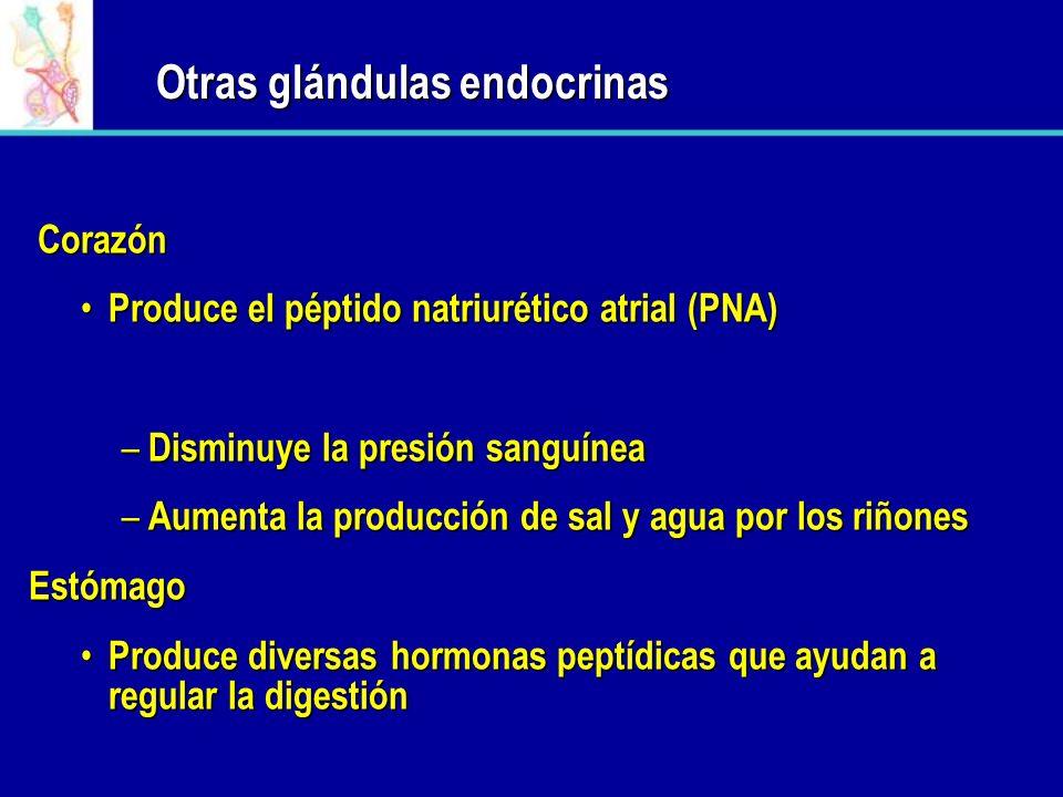 OTRAS GLÁNDULAS ENDOCRINAS Glándula Pineal: produce la hormona melatonina Riñones: Producen la hormona erytropoyetina – En respuesta a una baja de oxí