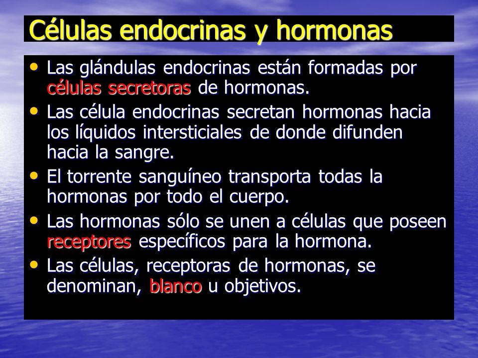 Células endocrinas y hormonas Las glándulas endocrinas están formadas por células secretoras de hormonas.