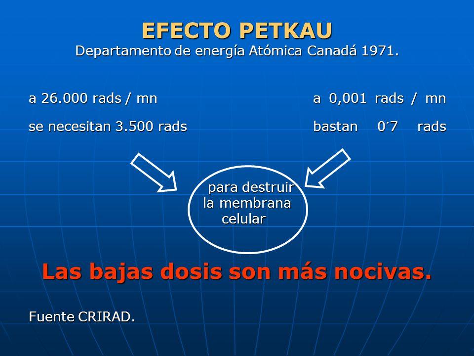 EFECTO PETKAU Departamento de energía Atómica Canadá 1971. a 26.000 rads / mn a 0,001 rads / mn se necesitan 3.500 radsbastan 0´7 rads para destruir p