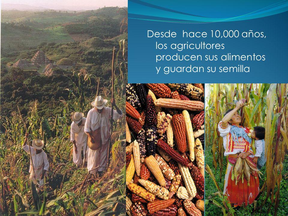 ¿Soberanía o seguridad alimentaria.
