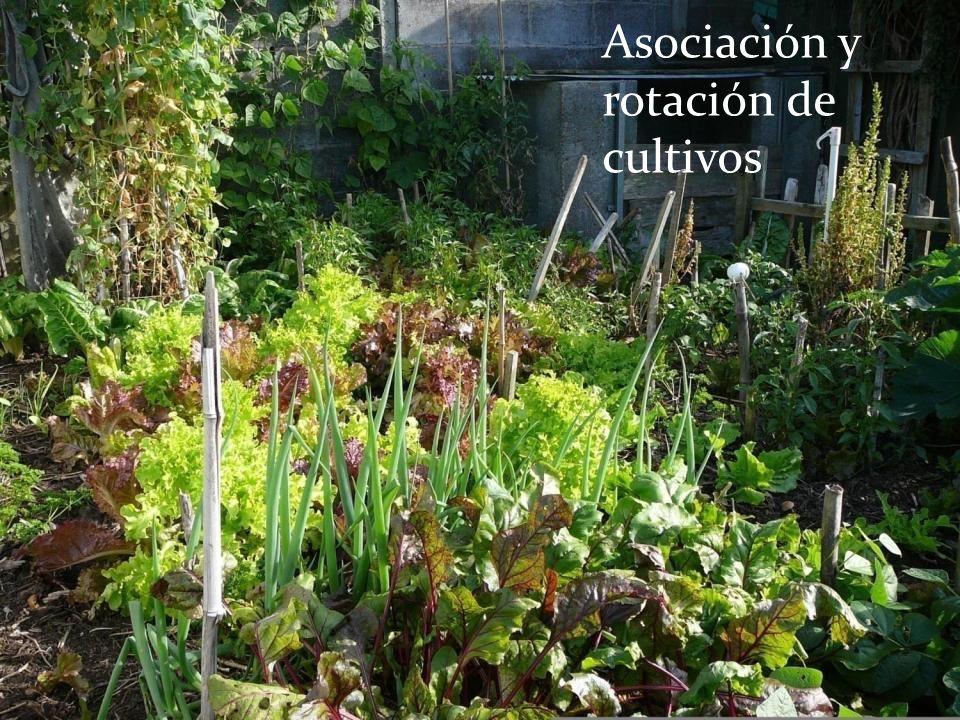 Asociación y rotación de cultivos