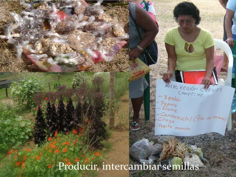 Producir, intercambiar semillas