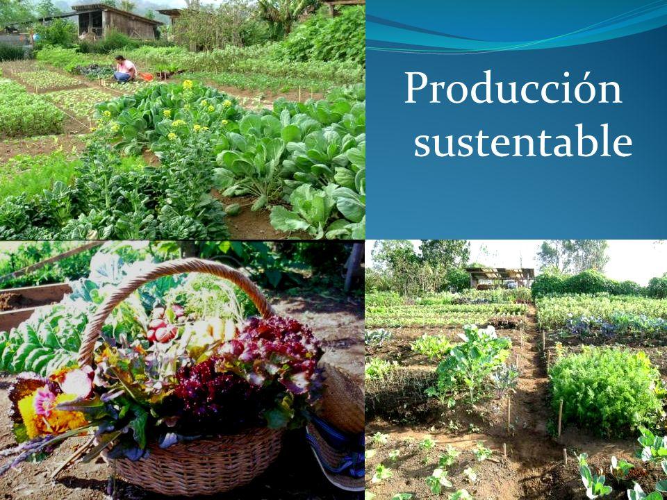 La formula de la sustentabilidad Porcentajes aproximados de sustentabilidad en el área de cultivo: 60/30/10 Aproximadamente 40 camas (372 m 2 ) para una sola persona (~465 m 2 incluyendo los pasillos) ~24 camas Cultivos calóricos y de carbono (por ej.