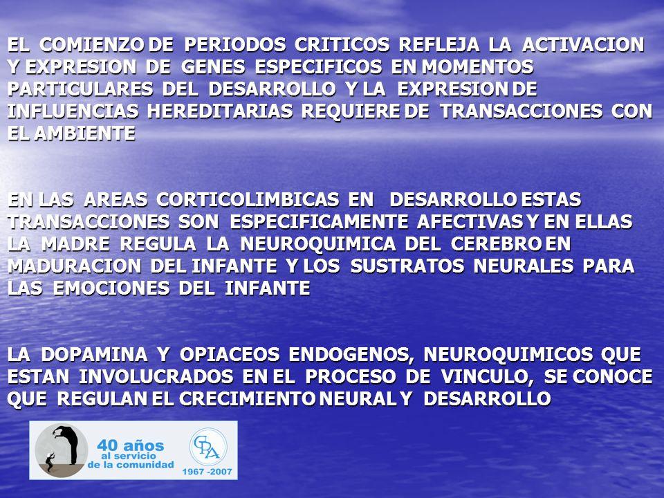 EL COMIENZO DE PERIODOS CRITICOS REFLEJA LA ACTIVACION Y EXPRESION DE GENES ESPECIFICOS EN MOMENTOS PARTICULARES DEL DESARROLLO Y LA EXPRESION DE INFL