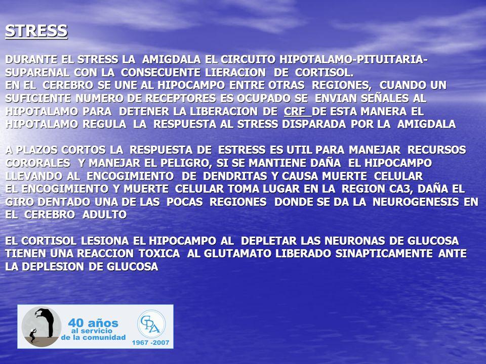 STRESS DURANTE EL STRESS LA AMIGDALA EL CIRCUITO HIPOTALAMO-PITUITARIA- SUPARENAL CON LA CONSECUENTE LIERACION DE CORTISOL. EN EL CEREBRO SE UNE AL HI