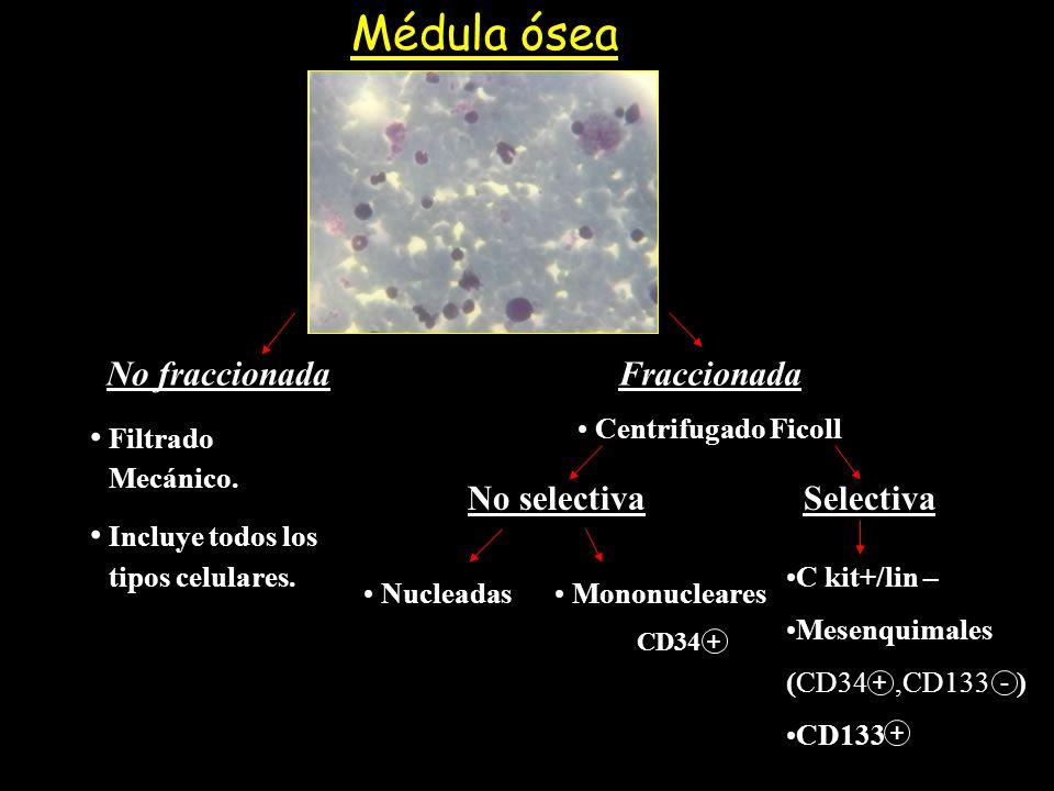 Médula ósea No fraccionada Filtrado Mecánico. Incluye todos los tipos celulares. No selectiva + Nucleadas Mononucleares Selectiva C kit+/lin – Mesenqu