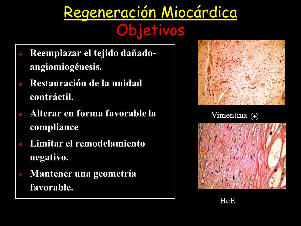 Regeneración Miocárdica Objetivos Reemplazar el tejido dañado- angiomiogénesis. Restauración de la unidad contráctil. Alterar en forma favorable la co