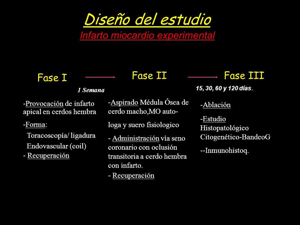 Diseño del estudio -Provocación de infarto apical en cerdos hembra -Forma: Toracoscopía/ ligadura Endovascular (coil) - Recuperación -Aspirado Médula
