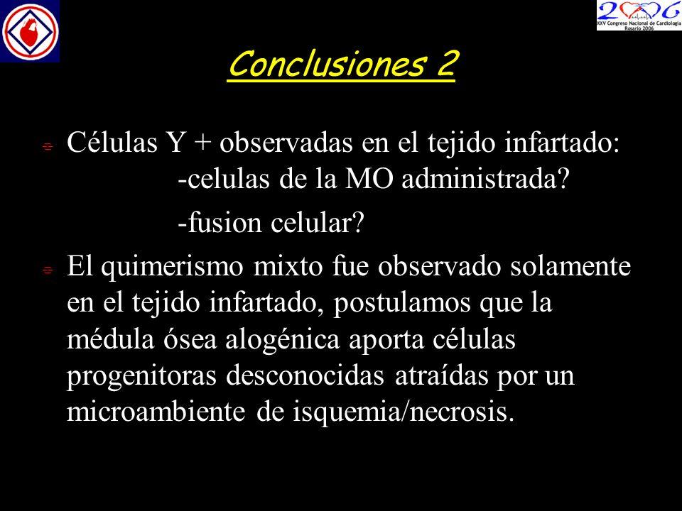 Conclusiones 2 Células Y + observadas en el tejido infartado: -celulas de la MO administrada? -fusion celular? El quimerismo mixto fue observado solam