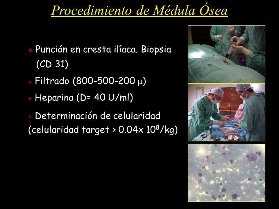 Procedimiento de Médula Ósea Punción en cresta ilíaca. Biopsia (CD 31) Filtrado (800-500-200 ) Heparina (D= 40 U/ml) Determinación de celularidad (cel