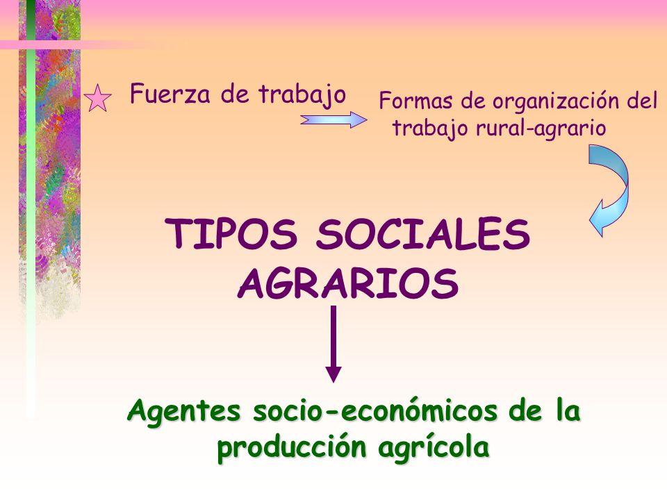 TIPOS SOCIALES AGRARIOS Agentes socio-económicos de la producción agrícola Fuerza de trabajo Formas de organización del trabajo rural-agrario