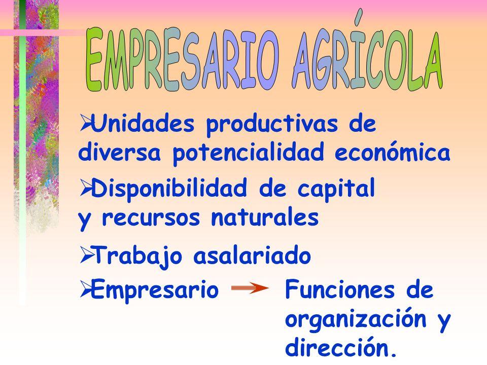Unidades productivas de diversa potencialidad económica Disponibilidad de capital y recursos naturales Trabajo asalariado EmpresarioFunciones de organ