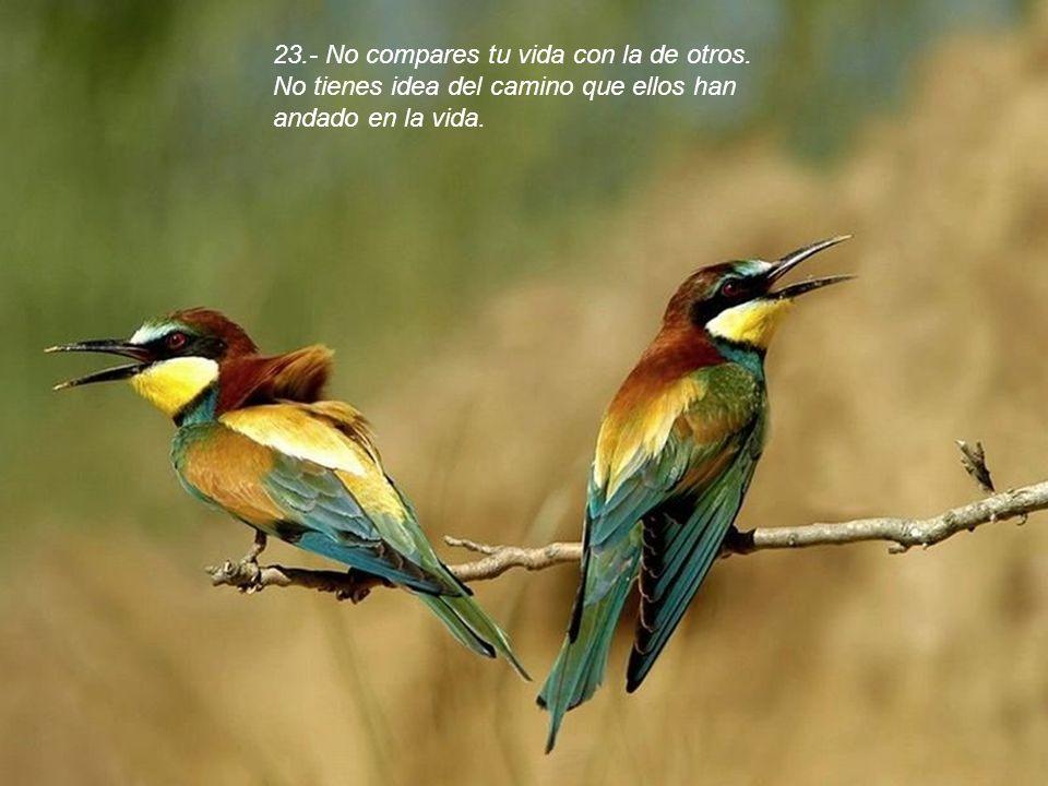 22.- Ponte en paz con tu pasado, así no arruinará tu presente.