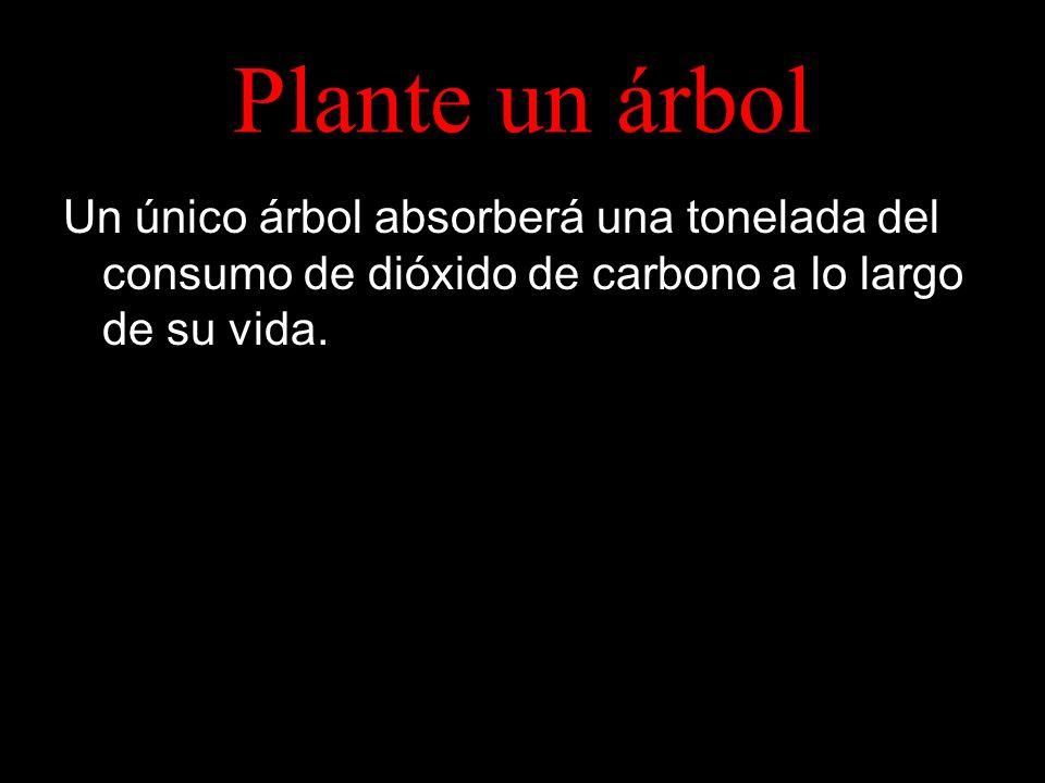 Plante un árbol Un único árbol absorberá una tonelada del consumo de dióxido de carbono a lo largo de su vida.