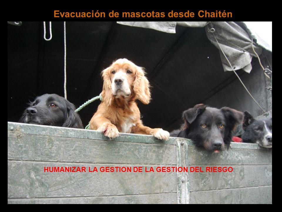 Evacuación de mascotas desde Chaitén HUMANIZAR LA GESTION DE LA GESTION DEL RIESGO