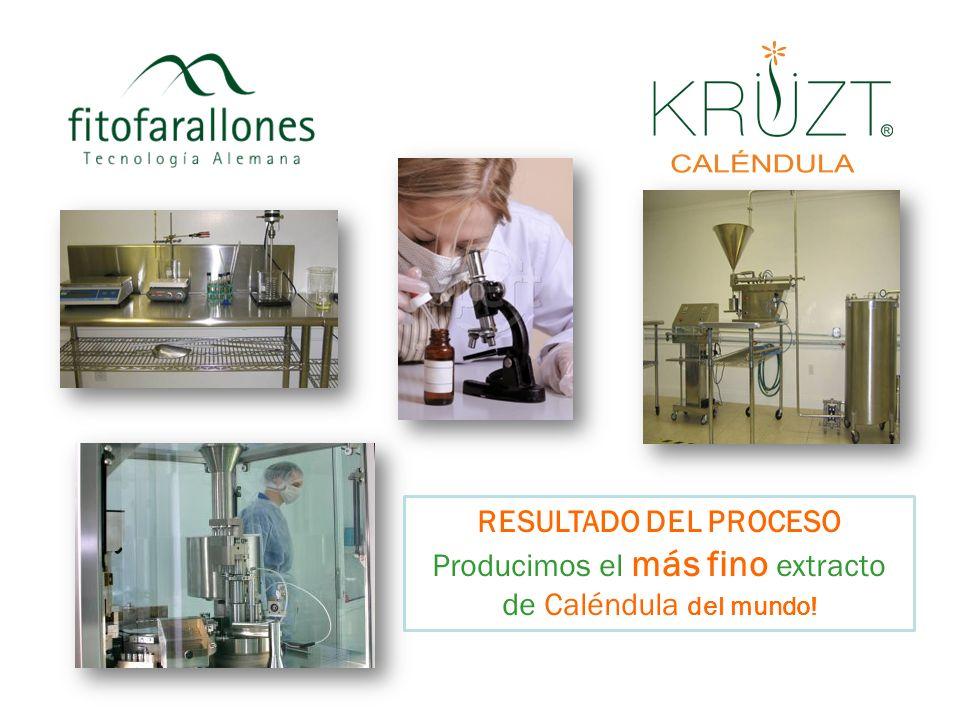 RESULTADO DEL PROCESO Producimos el más fino extracto de Caléndula del mundo!