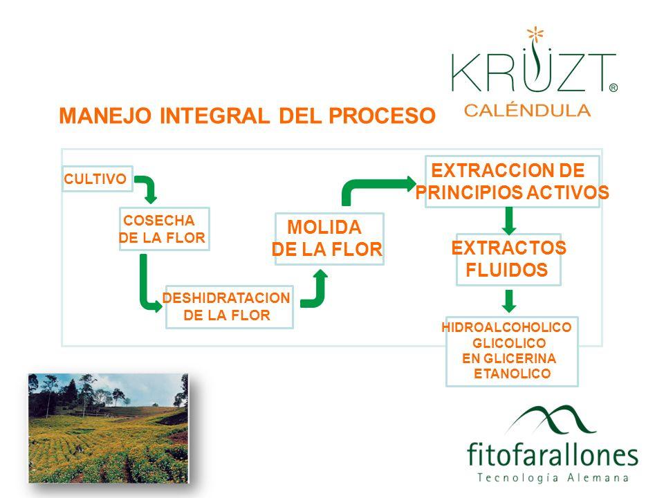 Por que somos diferentes Estamos investigando y desarrollando formulas con base en la planta Caléndula officinalis desde el año 1.990.