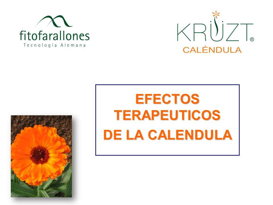 EFECTOS TERAPEUTICOS DE LA CALENDULA