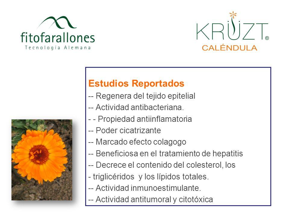 CULTIVO Fitofarallones cuenta con sus propios cultivos de Caléndula, los cuales cumplen las normas internacionales (IFOAM) que regulan la siembra y comercialización de plantas medicinales.