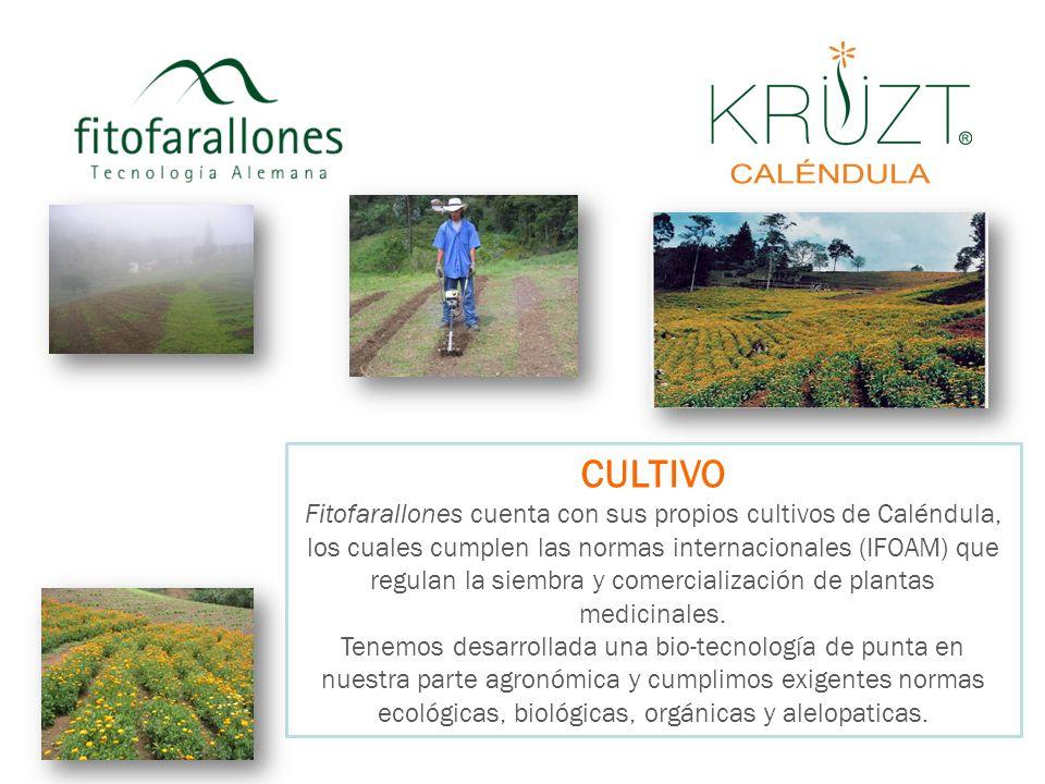 CULTIVO Fitofarallones cuenta con sus propios cultivos de Caléndula, los cuales cumplen las normas internacionales (IFOAM) que regulan la siembra y co