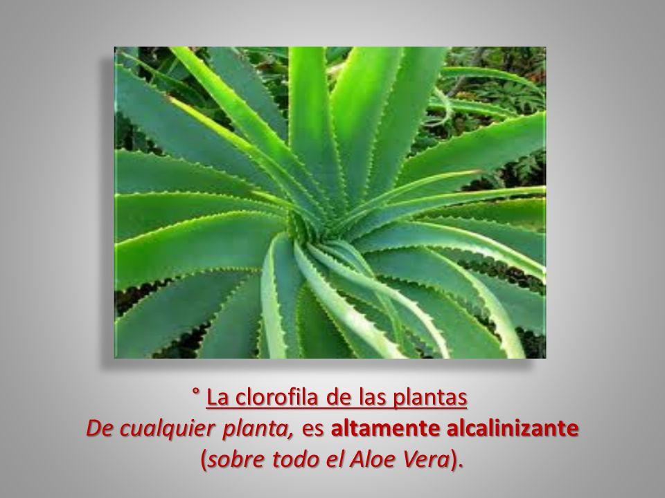 ° La clorofila de las plantas ° La clorofila de las plantas De cualquier planta, es altamente alcalinizante (sobre todo el Aloe Vera). (sobre todo el