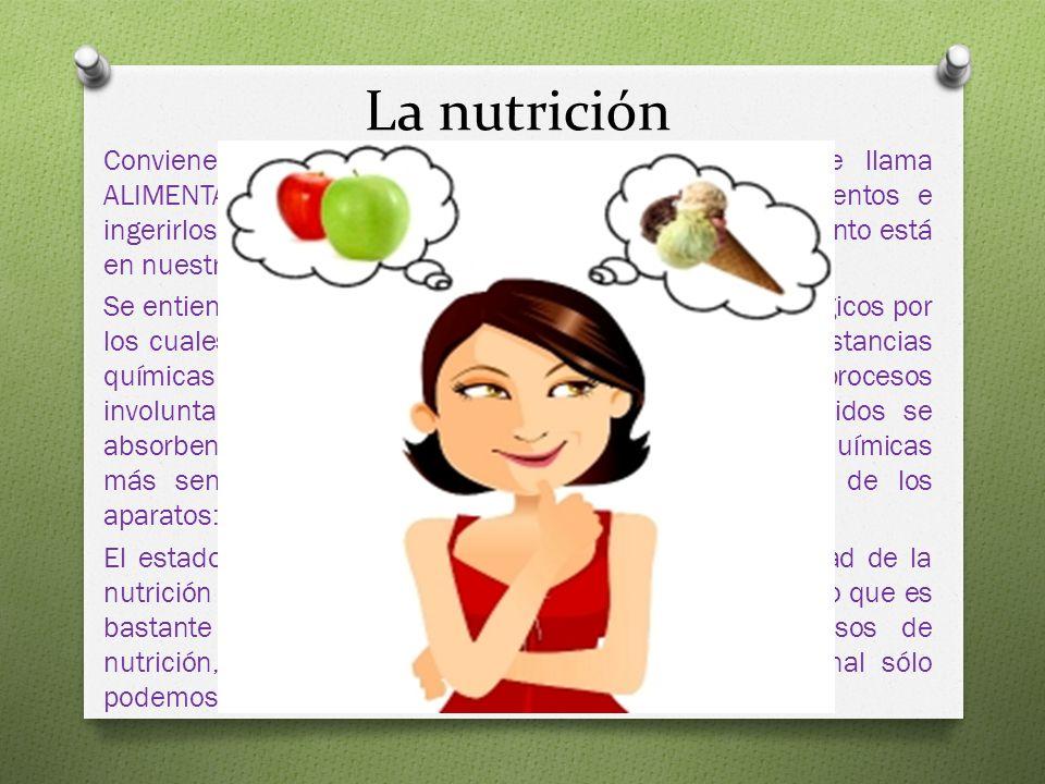 La nutrición Conviene distinguir entre alimentación y nutrición. Se llama ALIMENTACIÓN al acto de proporcionar al cuerpo alimentos e ingerirlos. Es un