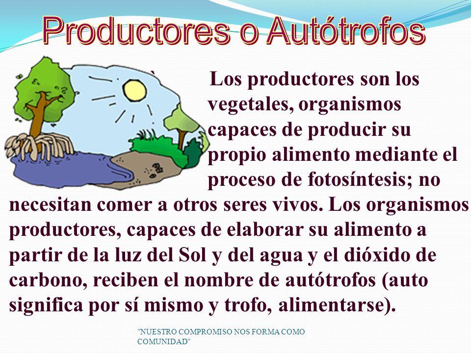 ` Los productores son los vegetales, organismos capaces de producir su propio alimento mediante el proceso de fotosíntesis; no necesitan comer a otros seres vivos.