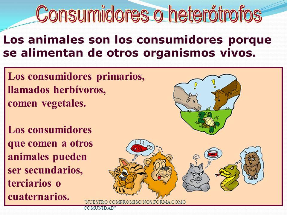 Los consumidores primarios, llamados herbívoros, comen vegetales.