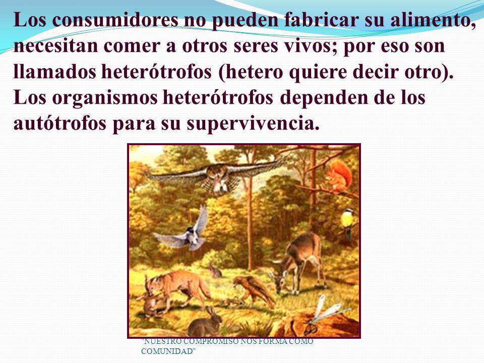 Los consumidores no pueden fabricar su alimento, necesitan comer a otros seres vivos; por eso son llamados heterótrofos (hetero quiere decir otro).